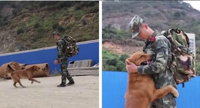 capaa Cao militar se recusa a deixar cuidador Eles passaram dois anos juntos dia e noite