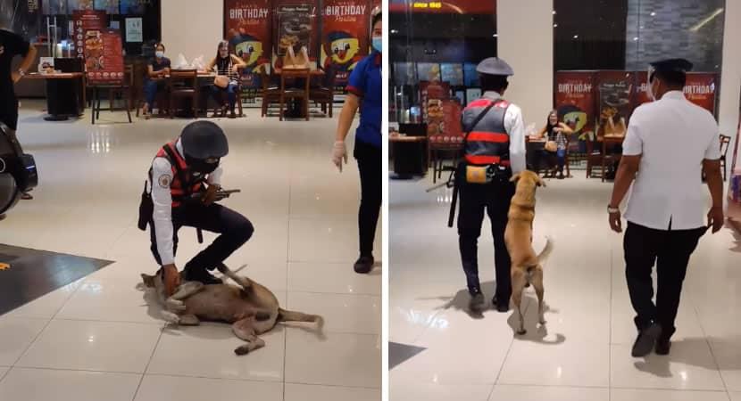 capacão solitário que entrou em shopping em busca de carinho foi recebido com amor e ganhou um lar