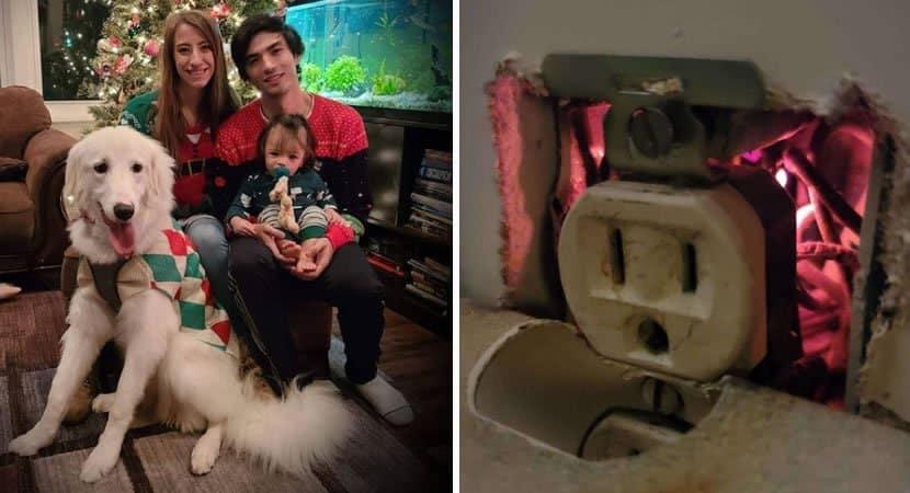 capacachorrinha salva vida da família de incêndio ao encontrar faíscas em tomada Uma heroína