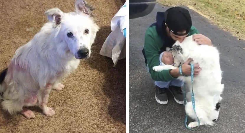 capaesse cãozinho sofria de dor ao ser tocado mas hoje não consegue parar de abraçar seu novo dono