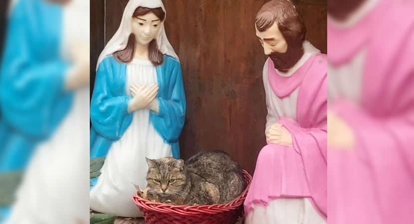 capaeste gatinho foi fotografado acomodado em manjedoura. Está pronto para o Natal