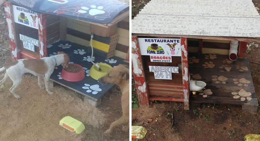 capahomem constrói restaurante para alimentar cães de rua a gente tem como pedir eles não