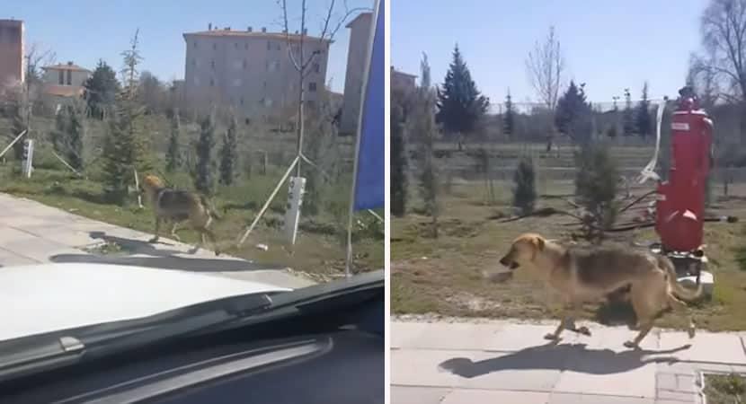 capamotorista segue cadela que andava pela rua com pote de comida e se surpreende com o que encontrou
