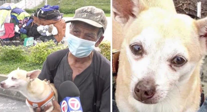 capapós dias sozinho morador de rua reencontra cadelinha que havia sido roubada e chora de alegria