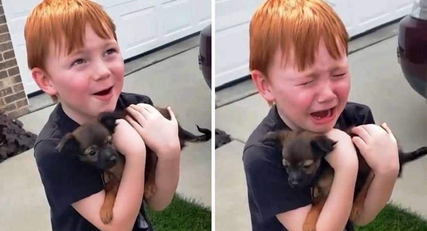 menino chora de alegria ao ser surpreendido com um cachorrinho Ganhou um melhor amigo