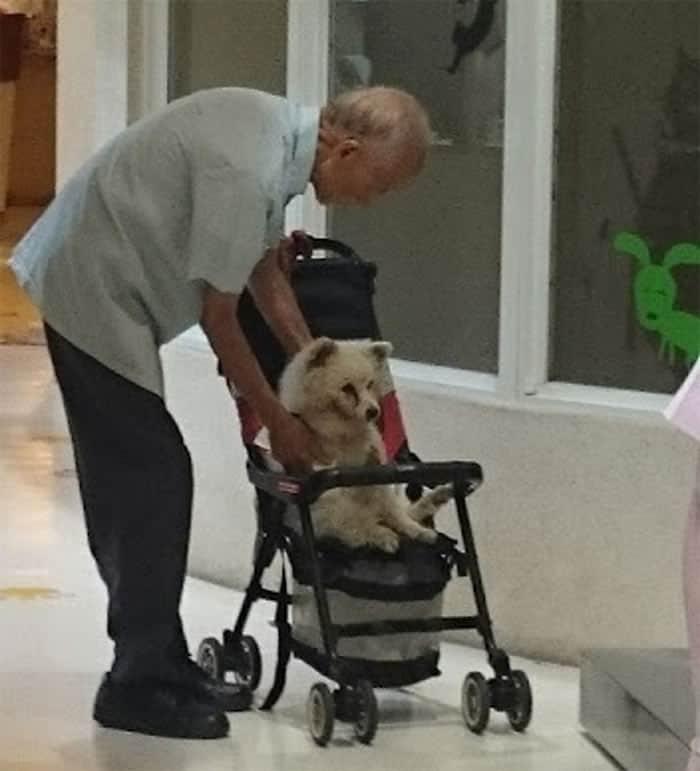 2 Vovo leva seu cao velhinho ao veterinario em carrinho de bebe Uma amizade sem limite de idade
