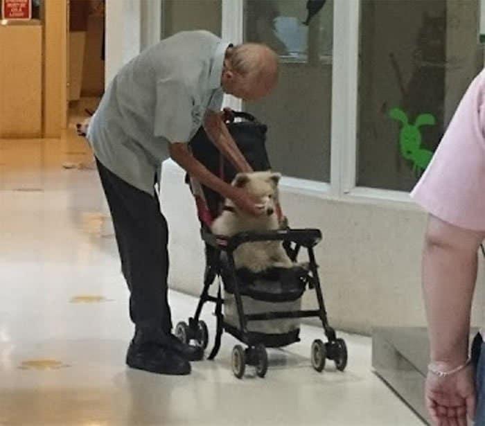 3 Vovo leva seu cao velhinho ao veterinario em carrinho de bebe Uma amizade sem limite de idade