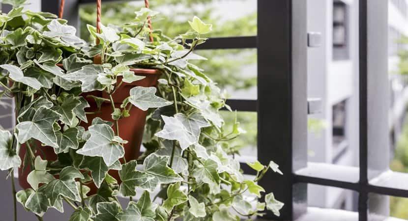 44 plantas incriveis para refrescar o seu lar durante o verao