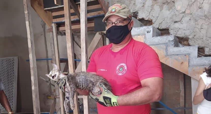 CAPA Apos 24 horas preso em um cano gatinho gera comocao ao ser finalmente resgatado