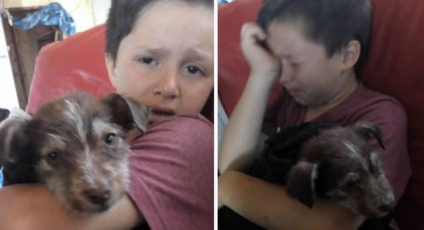 CAPA Menino de apenas 7 anos salva filhote de criancas que queriam mata lo Um pequeno heroi