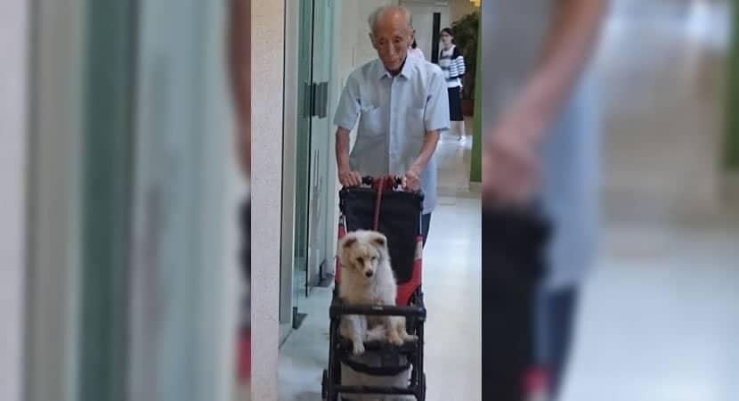 CAPA Vovo leva seu cao velhinho ao veterinario em carrinho de bebe Uma amizade sem limite de idade