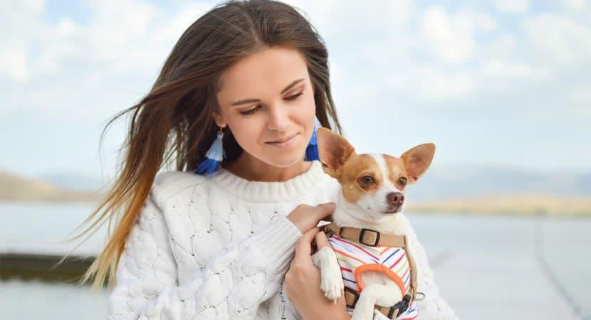 Humanizacao de pets afinal devemos tratar o pet como gente