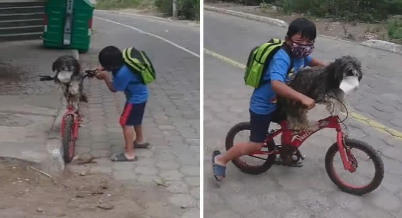 menino coloca cao em sua bicicleta e veste mascara em seu rosto para protege lo de Covid