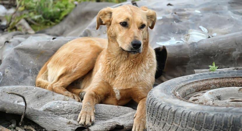 prefeito de cidade na Paraiba revoga decreto que permitia que animais abandonados fossem sacrificados