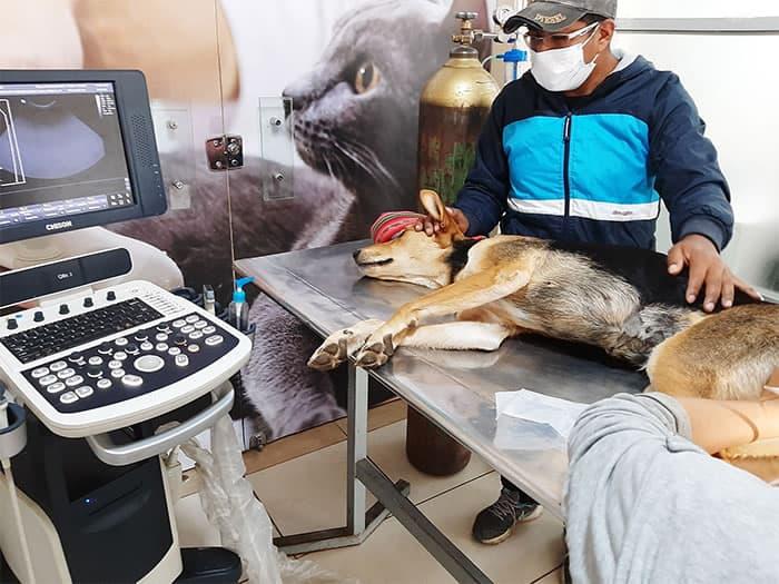 2 Homem anda quilometros todos os dias em busca de ajuda para cadela com paralisia. Nao a abandona