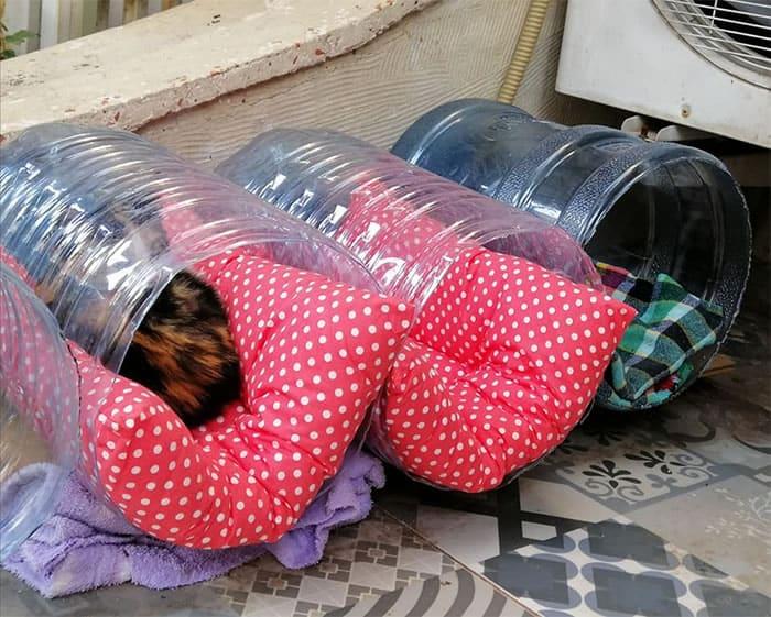3 Moradores se mobilizam para fazer caminhas para gatinhos de rua. Um exemplo de altruismo