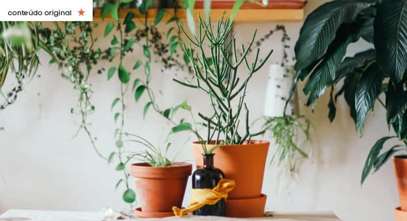 Capa As 4 plantas que voce nao deve ter dentro de casa. Elas so atraem mas energias