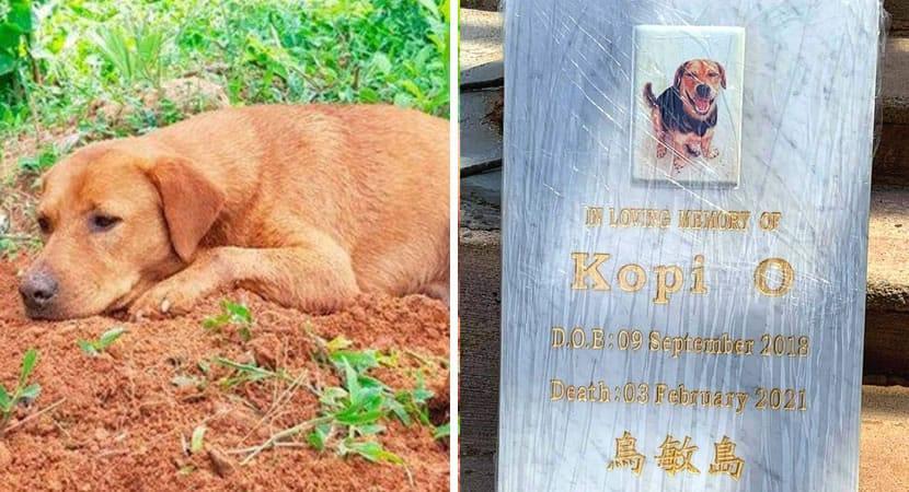 Capa Cachorro fica sobre tumulo de seu irmao que morreu em acidente. A saudade e maior que tudo