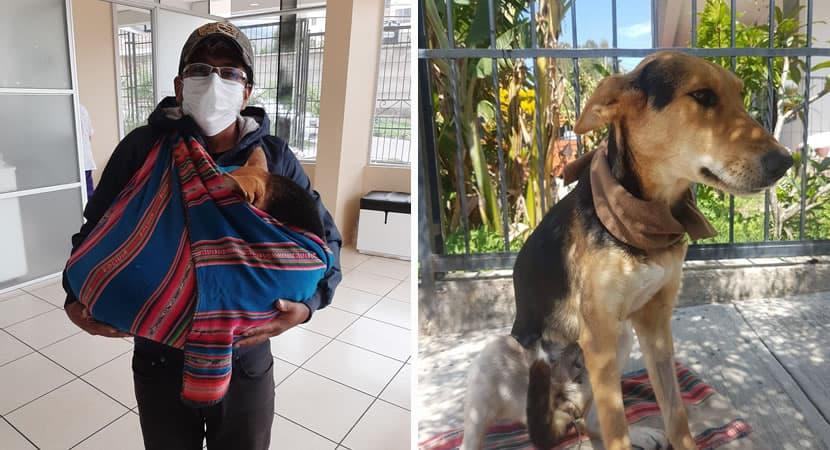 Capa Homem anda quilometros todos os dias em busca de ajuda para cadela com paralisia. Nao a abandona