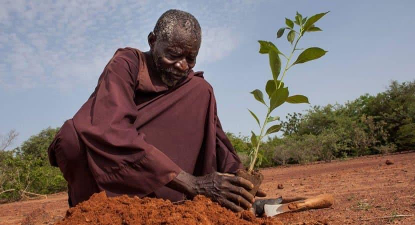 Capa Homem cultivou sozinho uma floresta que foi capaz de combater a seca no deserto em sua regiao
