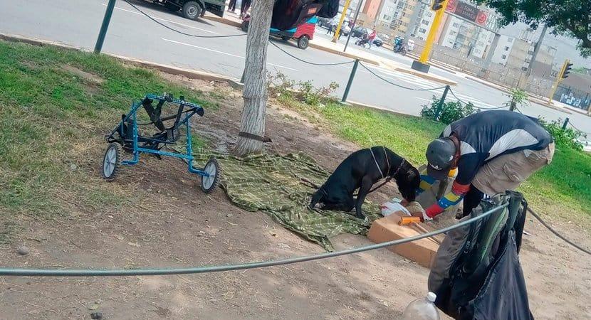 Capa Homem em situacao de rua alimenta e zela pelo seu cao cadeirante Ele nao pode se defender sozinho