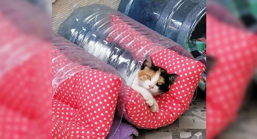 Capa Moradores se mobilizam para fazer caminhas para gatinhos de rua. Um exemplo de altruismo