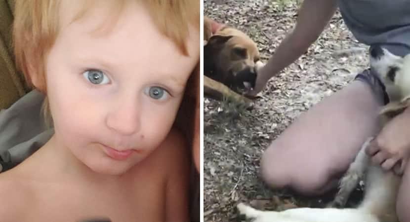 capacaes cuidam de menino autista de 3 anos que desapareceu de casa por horas O mantiveram seguro