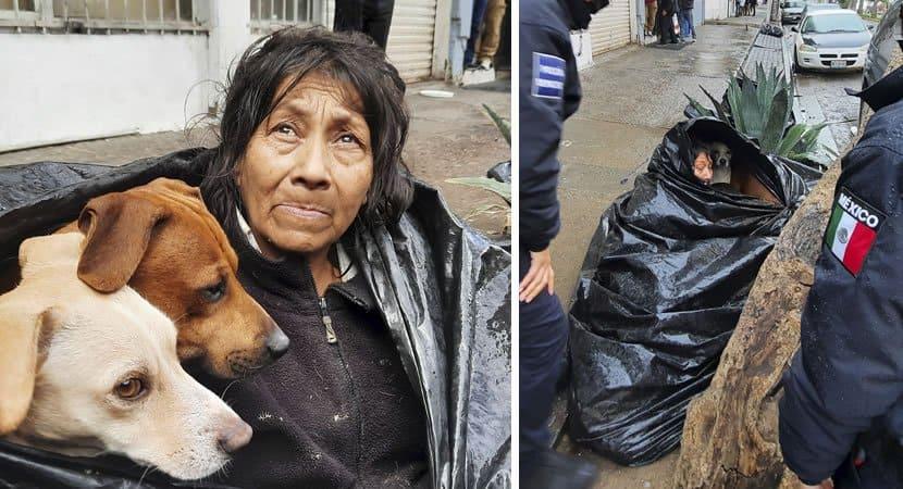 capamoradora de rua se recusa a ir para abrigo para nao abandonar seus caes Sao sua prioridade