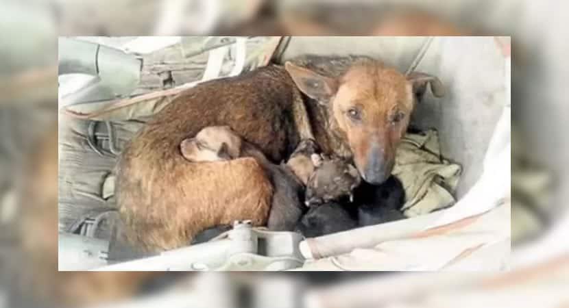 1 capa Bebe abandonado e salvo por cachorrinha que o acolheu em sua ninhada. O amor nao tem barreiras