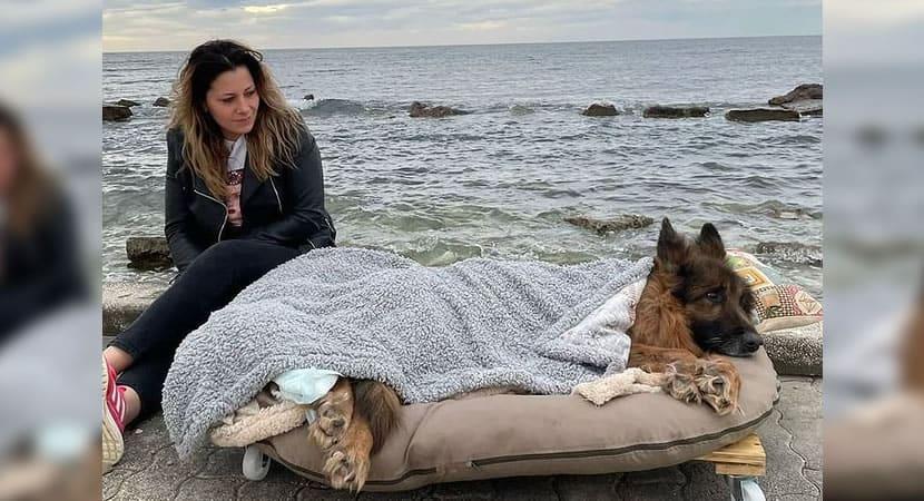 1 capa Cachorro abandonado com paralisia visitou o mar antes de morrer Deram lhe o melhor nas ultimas horas