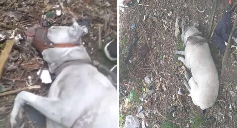2 2 Caozinho abandonado para morrer encontrado amarrado e amordacado e resgatado