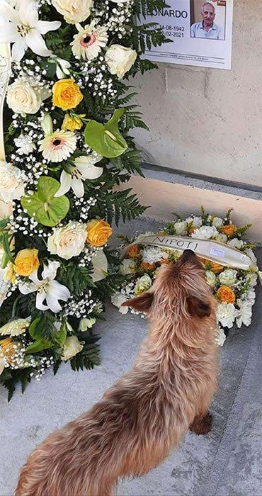 2 3 Caozinho andava mais de 3km todos os dias para visitar tumulo do dono Guiado pelo seu amor