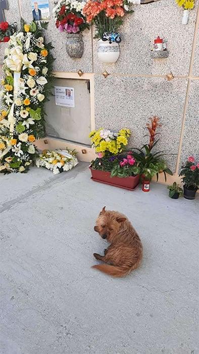 2 4 Caozinho andava mais de 3km todos os dias para visitar tumulo do dono Guiado pelo seu amor