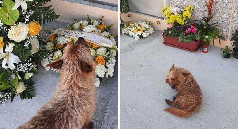 2 capa Caozinho andava mais de 3km todos os dias para visitar tumulo do dono Guiado pelo seu amor