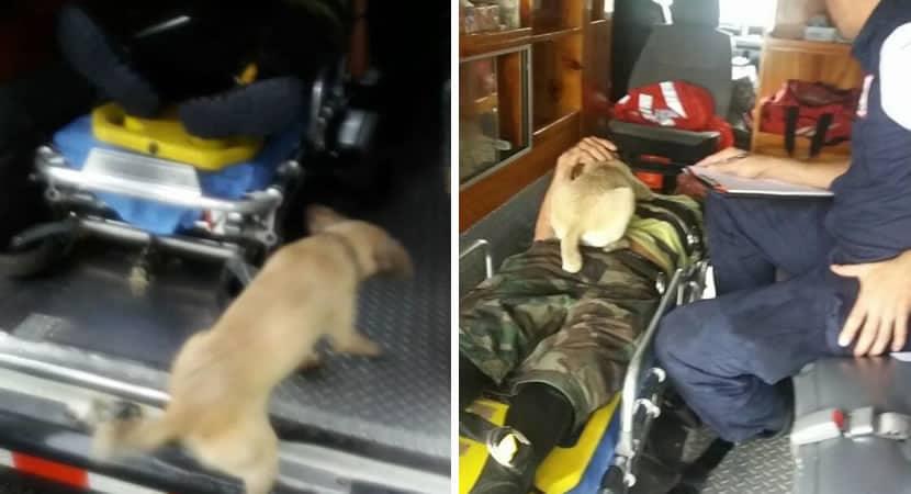 2arriscando sua vida cadelinha corre pela rua implorando ajuda ao seu dono ferido