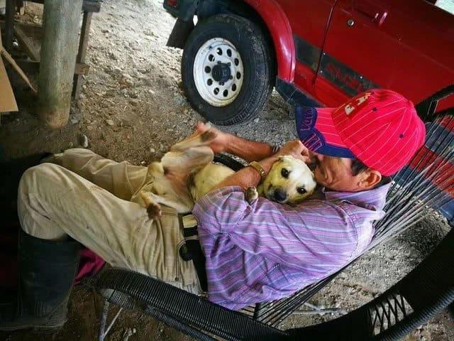 3arriscando sua vida cadelinha corre pela rua implorando ajuda ao seu dono ferido