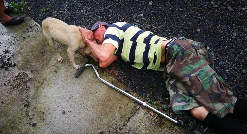 capaarriscando sua vida cadelinha corre pela rua implorando ajuda ao seu dono ferido