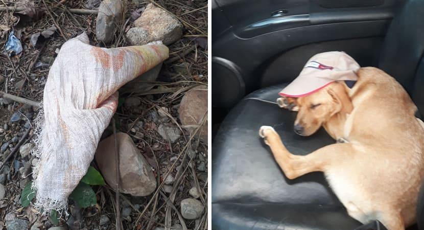 capahomem salva vida de cadela abandonada em saco de fibra durante sol forte Um verdadeiro heroi