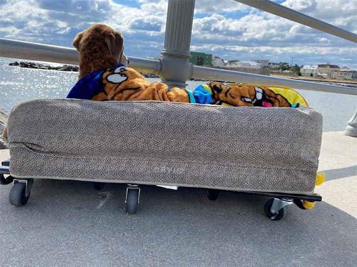 1 3 Casal constroi cama especial para cadelinha idosa ver o mar pela ultima vez Despedida emocionante