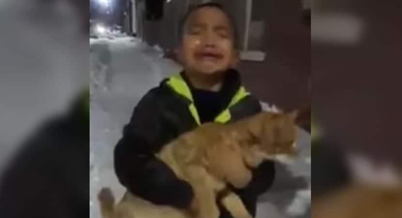 4 capa Coitadinho eu amo ele menino implora a mae para resgatar gatinho abandonado