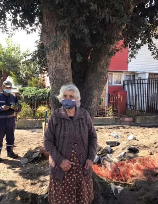 6 3 Idosa de 80 anos se agarra a uma arvore para evitar que ela seja cortada Sua coragem valeu a pena