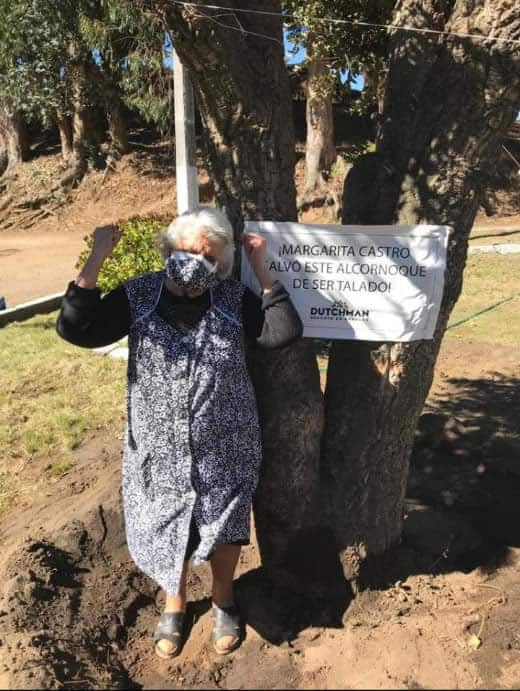 6 5 Idosa de 80 anos se agarra a uma arvore para evitar que ela seja cortada Sua coragem valeu a pena