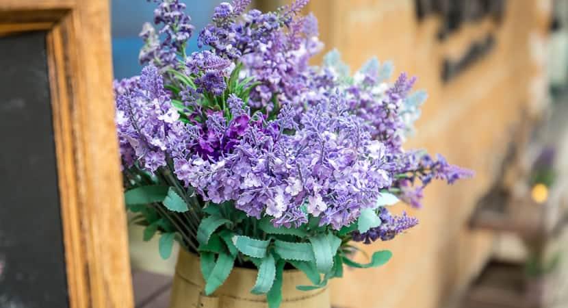 2aprenda a plantar lavanda em vasos e deixe sua casa mais fresca e perfumada