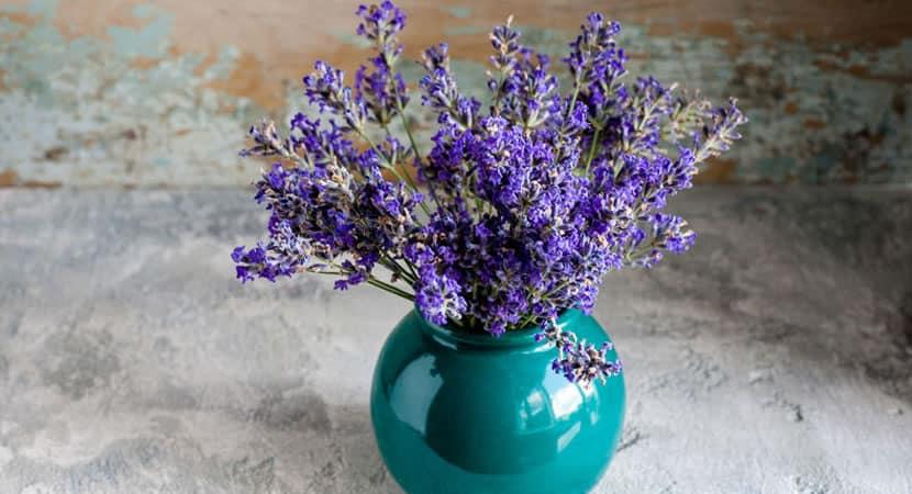 3aprenda a plantar lavanda em vasos e deixe sua casa mais fresca e perfumada