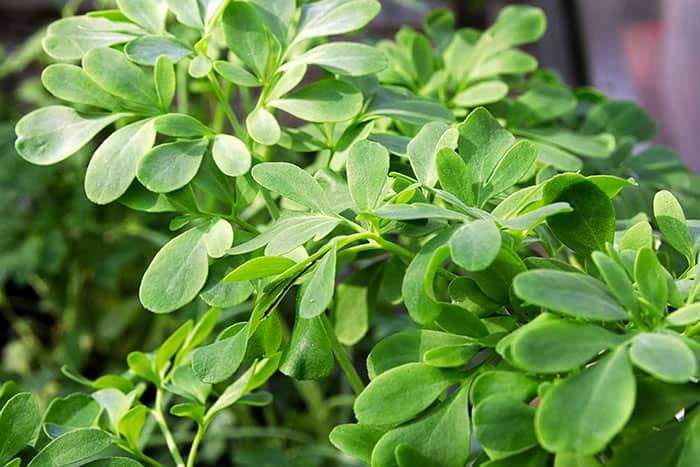 4 3 Use o aroma das plantas a seu favor Descubra o poder das fragrancias e onde usa las em sua casa
