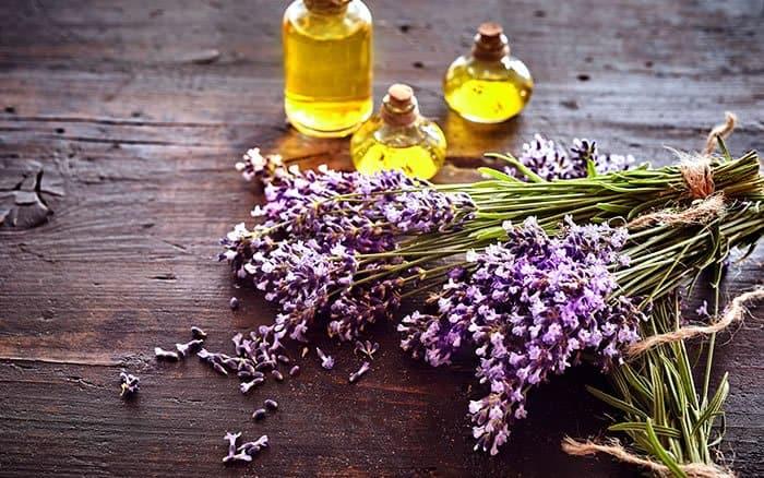 4 4 Use o aroma das plantas a seu favor Descubra o poder das fragrancias e onde usa las em sua casa