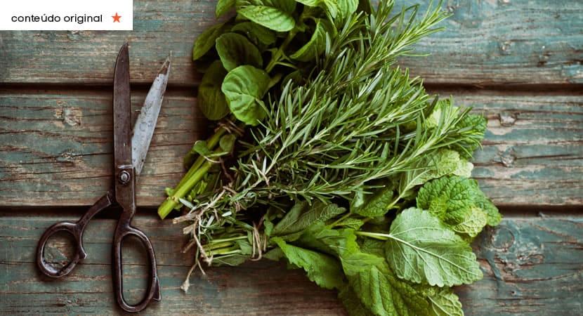 4 capa Use o aroma das plantas a seu favor Descubra o poder das fragrancias e onde usa las em sua casa