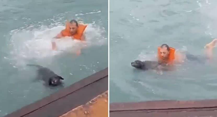 6 capa Sem pensar duas vezes homem pula no mar para salvar cao que se afogava Agiu como um heroi