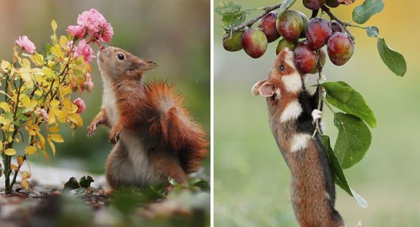 capafotografo encanta ao mostrar cenas incriveis que acontecem na natureza quando nao estamos olhando 1