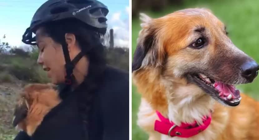 capamulher regata cadela perdida e assustada em estrada e pedala 20km com ela no colo